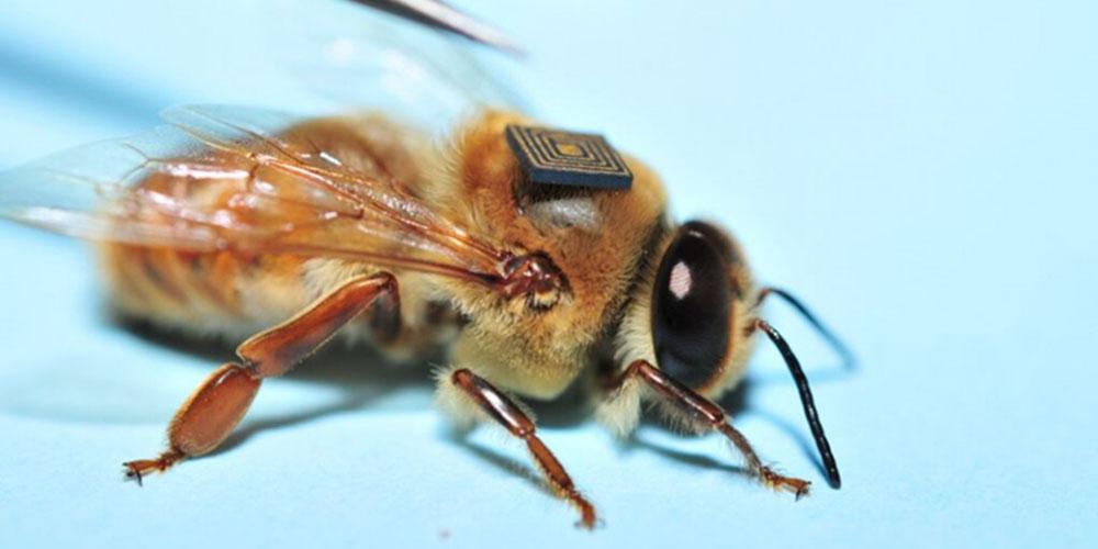 Intel Bees
